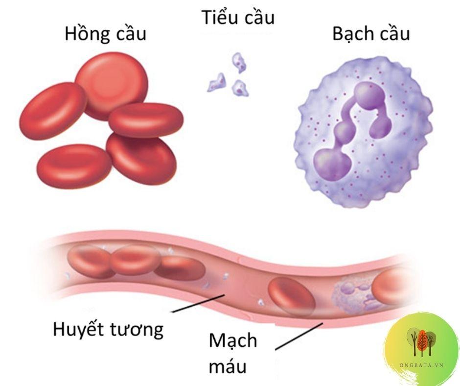 Tra nhóm máu online thông qua các chỉ số của máu